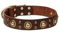 Leather Golden Retriever Collar with Circles and Half-Ball Studs