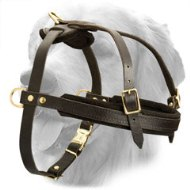 Tracking / Pulling Leather Dog Harness For Golden Retriever