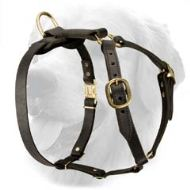 Latigo Leather Roading Harness for Golden Retriever