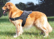 Golde Retrieve Nylon multi-purpose dog harness- tracking/pulling