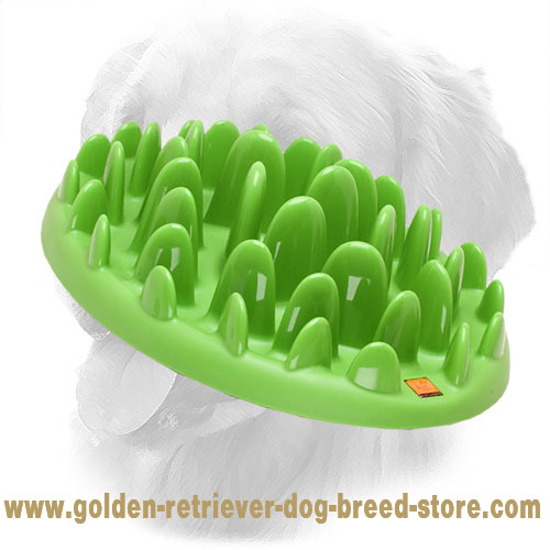 Healthy Way of Meal Consumption with Slow Golden Retriever Feeder