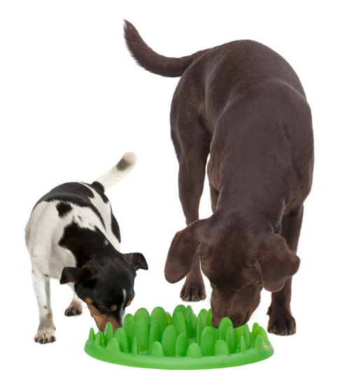 Two Dogs Eating from Plastic Golden Retriever Feeder