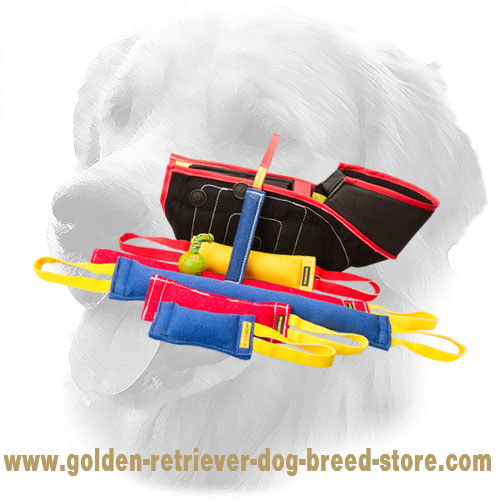 Convenient in Use French Linen Golden Retriever Bite Training Set for Puppies