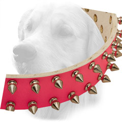 Nickel Spikes on Leather Golden Retriever  Collar