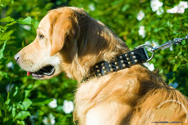Excellent Quality Leather Golden Retriever Collar with Columns of Decor