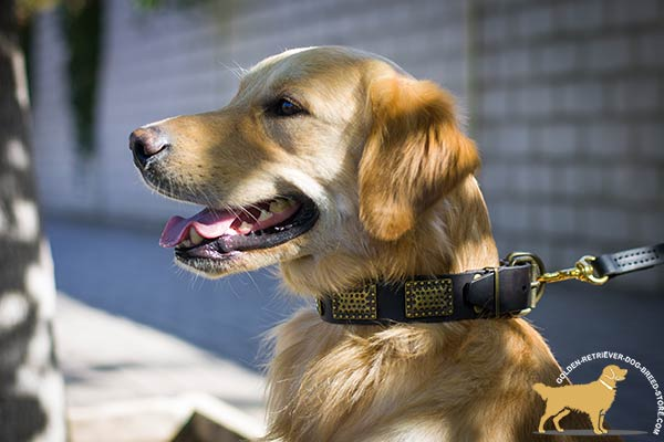Extravagant Leather Golden Retriever Collar with Antique Decor