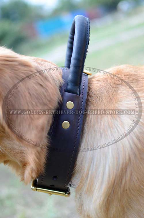 Soft to Touch Handle on Leather Dog Collar