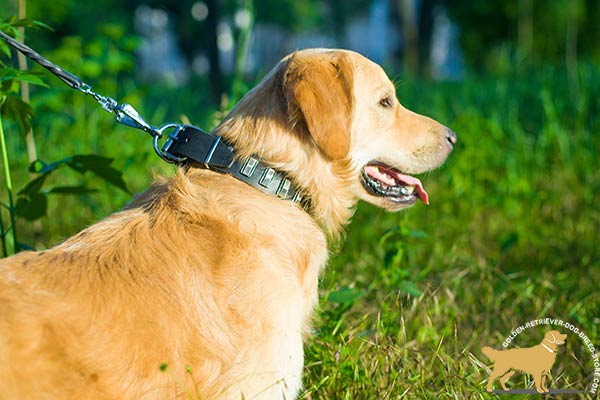 Stylish Leather Golden Retriever Collar