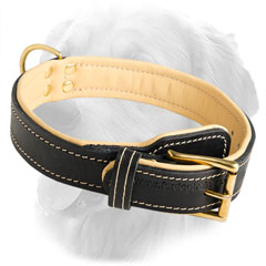 Dog Collar Soft Padded