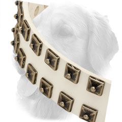 Silver-Like Studs on Leather Golden Retriever Collar