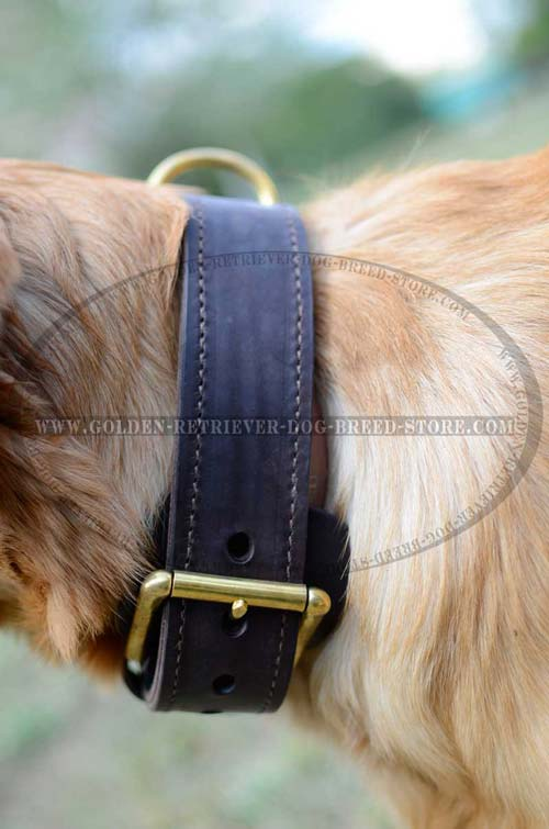 Brass Hardware on Leather Dog Collar