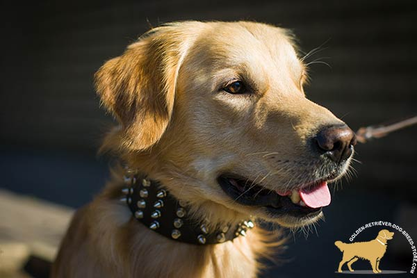 Fashionable Golden Retriever Collar with Riveted Spikes and Cones
