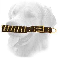Strong D-Ring on Golden Retriever Leather Collar