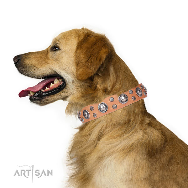 Everyday use decorated dog collar of high quality leather
