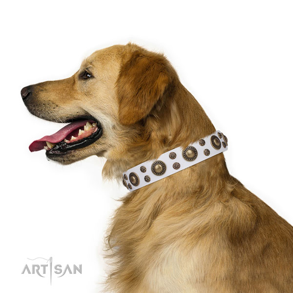 Fancy walking studded dog collar of fine quality material