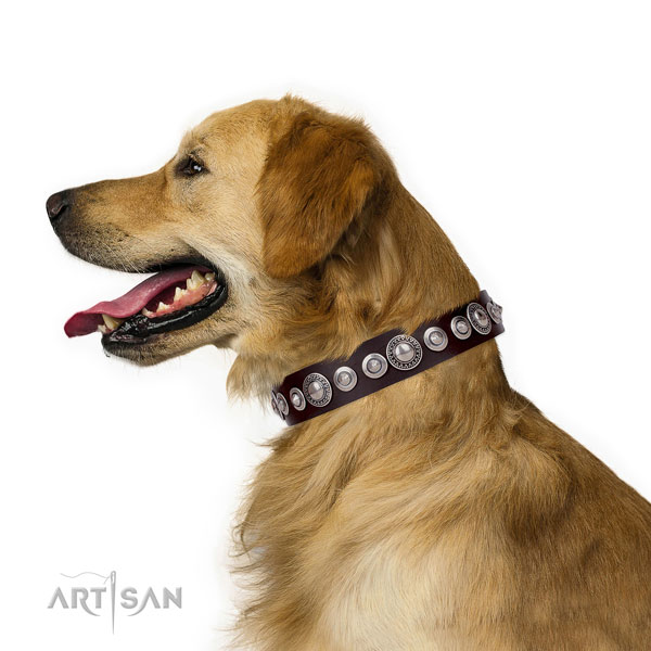 Extraordinary decorated leather dog collar for stylish walking