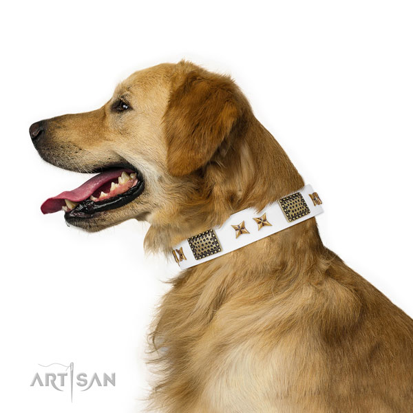 Fancy walking dog collar with unique adornments
