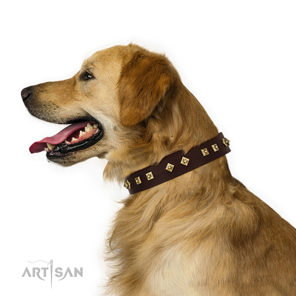 Remarkable embellishments on everyday use full grain natural leather dog collar