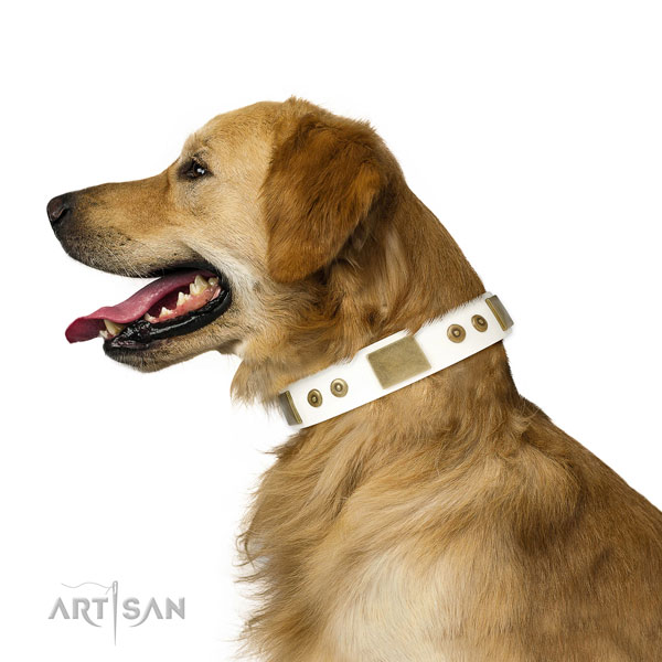Top notch daily walking dog collar of genuine leather