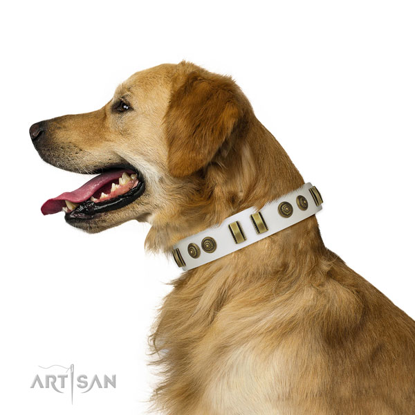 Walking dog collar of natural leather with stylish embellishments