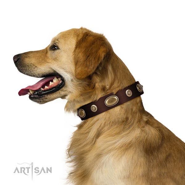 Walking dog collar of genuine leather with unique decorations