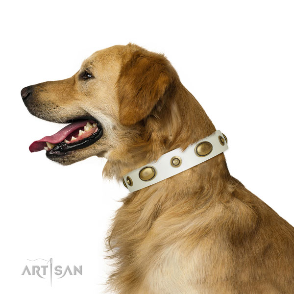 Comfy wearing dog collar of leather with stunning embellishments
