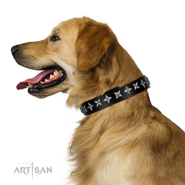 Walking decorated dog collar of top notch leather