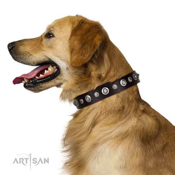 Reliable genuine leather dog collar with awesome embellishments