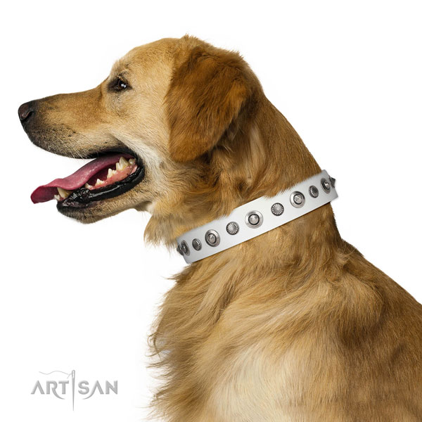 Natural leather collar with corrosion resistant buckle for your stylish canine