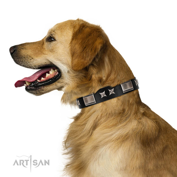 Walking reliable full grain natural leather dog collar with adornments