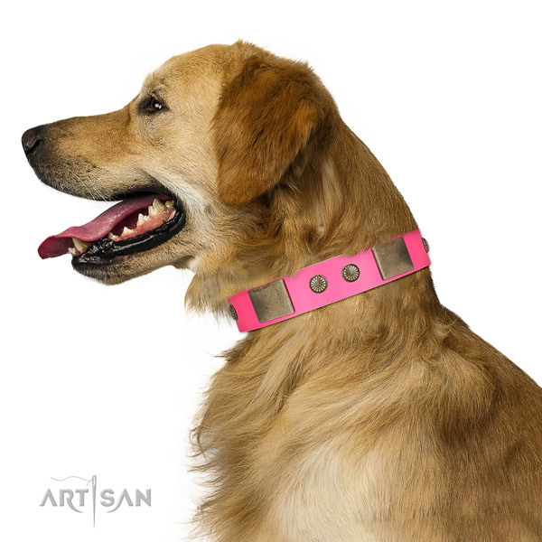 Rust resispinkt fittings on leather dog collar for easy wearing