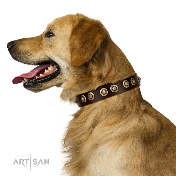 Corrosion resistant buckle on full grain natural leather dog collar for everyday walking