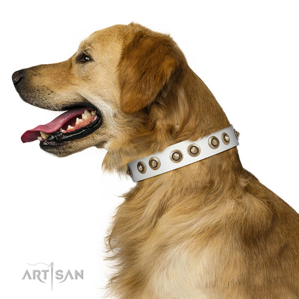 Fancy walking dog collar of leather with designer adornments