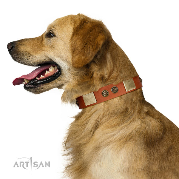 Embellished dog collar made for your stylish dog
