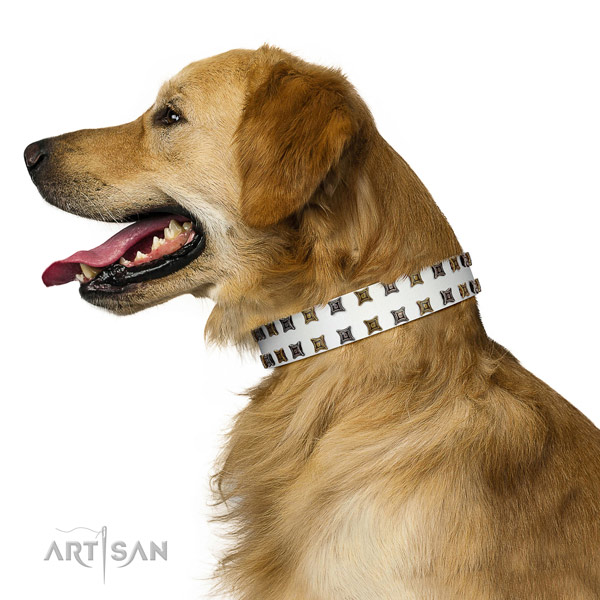 Best quality natural leather dog collar with embellishments for your four-legged friend