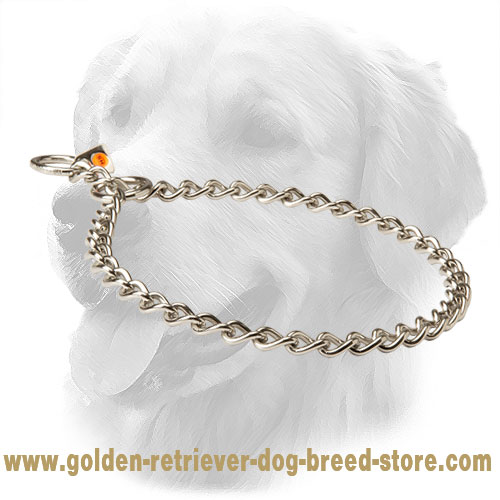 Golden Retriever Choke Collar for Obedience Training