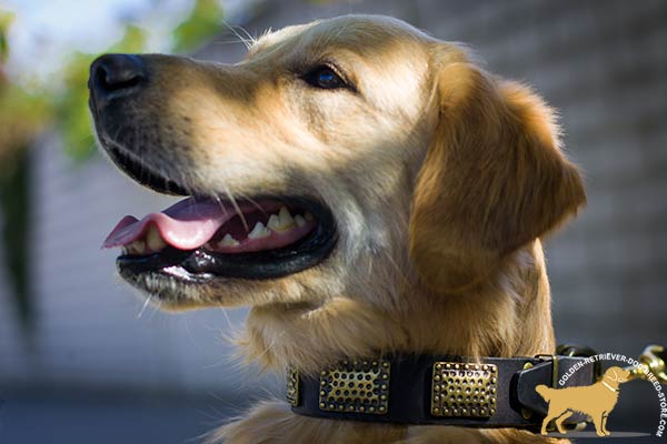Adorned Golden Retriever Collar with Brass Engraved Plates