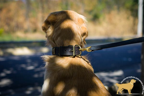 Strong Leather Golden Retriever Collar with Brass Riveted Hardware