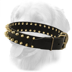 Leather Golden Retriever Collar with Golden-Like Spikes