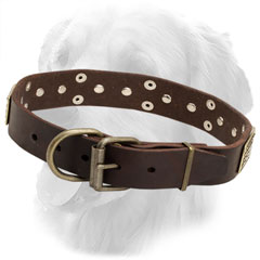Leather Golden Retriever Collar with Strong Fittings