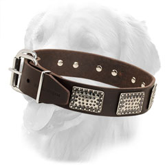Golden Retriever Collar with Nickel Plated Buckle