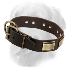 Golden Retriever Collar with Brass Buckle