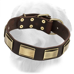 Leather Golden Retriever Collar with Brass Plates