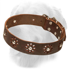 Leather Golden Retriever Collar with Silver-Like Studs