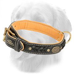 Nappa Padded Royal Golden Retriever Collar