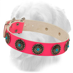 Golden Retriever Collar of Pink Color with Nickel Circles