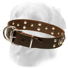 Leather Golden Retriever Collar with Standard Buckle