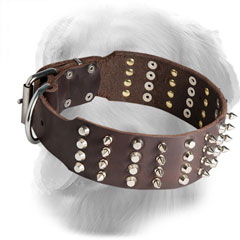 Wide Golden Retriever Collar with Nickel Plated Decorations