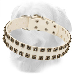 White Studded Leather Golden Retriever Collar