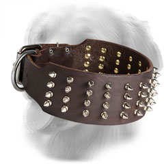 Golden Retriever Collar with Silver-Like Spikes